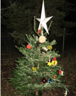 Weihnachtsbaum im Dohnwald